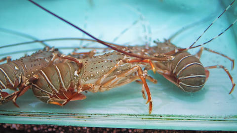 lobsters in the aquarium on the night market of food in Asia, street food Footage