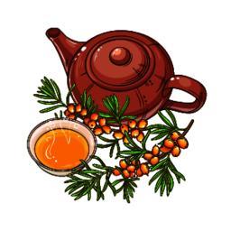 sea buckthorn tea vector Vector