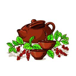 schisandra tea illustration Vector