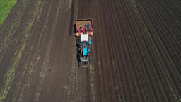 Harvesting potatoes on the field Footage