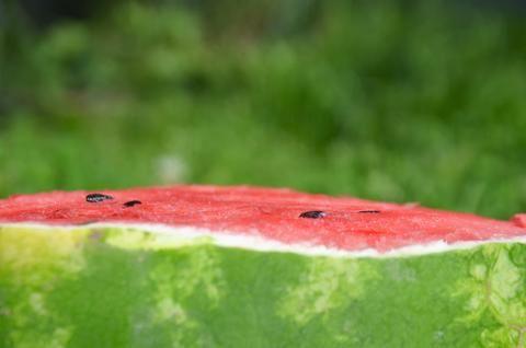 Watermelon 8 Photo