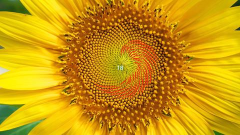 Fibonacci numbers Footage