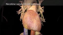Cigarette smoking, carbon monoxide, nicotine, and coronary disease Footage