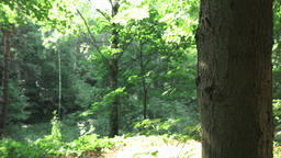4k C0011 summertime in the forest Footage