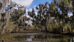 Trees in a Swamp in Louisiana 4019 Footage