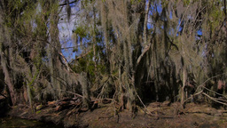 Treelined Shores of the Swamps in Louisiana 4020 Footage