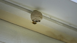 4K Wasp Nest on Side of House Gets Sprayed 4355 Footage