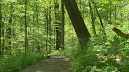 4K Walking on a Path in the Woods 4375 Footage