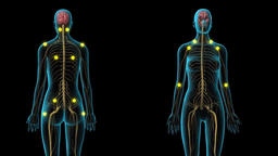 The Nervous System Is The Part Of Body Footage