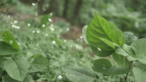 Nature 0100272932 영상물