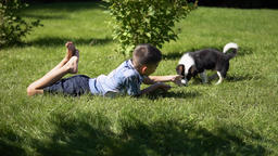 The boy is playing with a small dog in the park on the grass having a good mood Footage