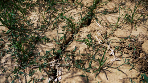 Cracked soil and dried plants Live Action