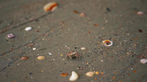 Krab searching food on the sand Stock Video Footage