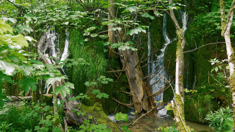 Small waterfalls between wood and green moss Live Action