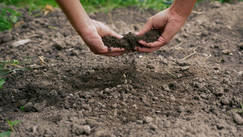 Testing the soil with the hands Live Action