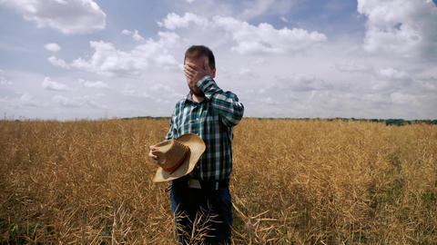 Tired and sad farmer near the canola plantation Live Action