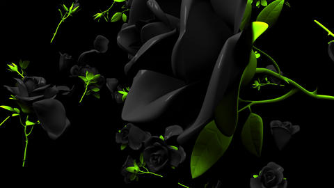Falling Black Roses On Black Background CG動画