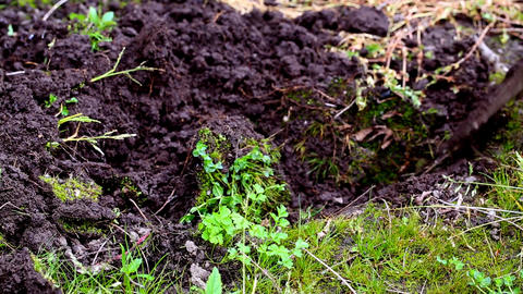 Gardening - digging ビデオ