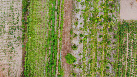 Drone shot aerial view scenic landscape of agriculture farm at countryside ライブ動画