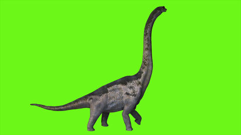 Dinosaur Braquiossauro animation on green screen. Realistic render Animación