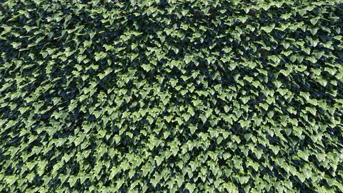 Leaf / Foliage Background Animation