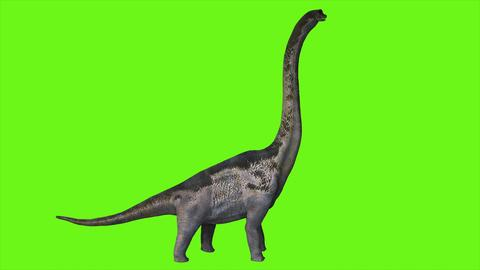 Dinosaur Braquiossauro on green screen. 3D Rendering Photo