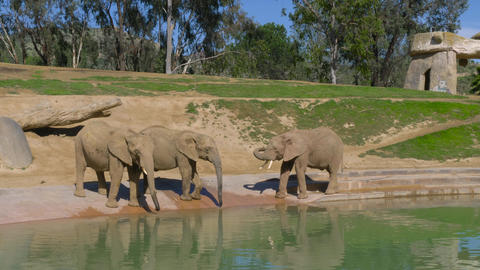 Young elephants play near a watering hole ビデオ