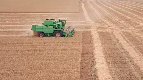 Combine Moves on a Wheat Field. Aerial View Footage