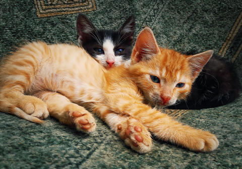 two kittens laying フォト