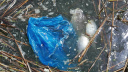 Water pollution. Dead fish and plastic bag Footage