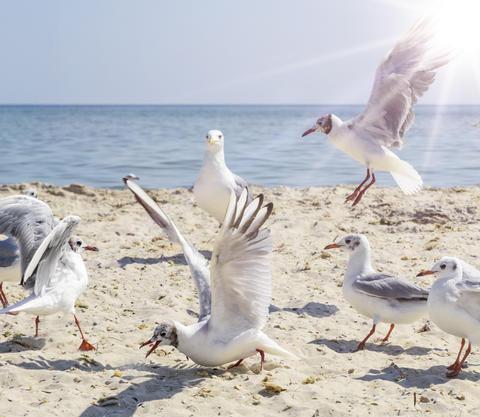 sea gulls on the beach, Ukraine village Lazurnoe Photo