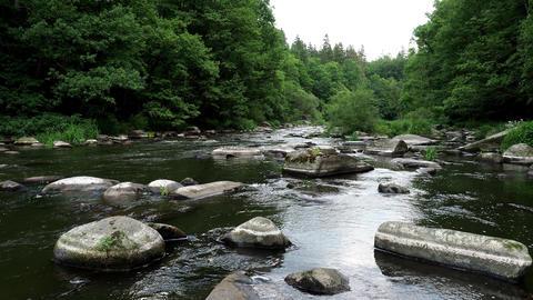 Landscape with forest, river and stones. River Sazava, Czech republic Live Action