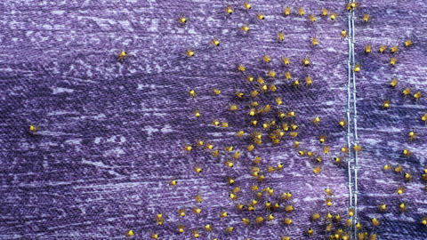 Colony of newborn spiders. A bundle of Araneus diadematus spiderlings Live Action