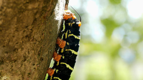 Butterfly Larva Archivo