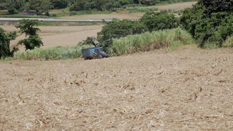 Sugarcane harvest Archivo