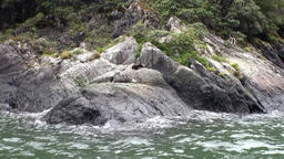 Seals on rocky coast of ocean in New Zealand ビデオ