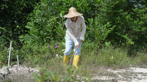Old Asian farmer cleaning land Live Action