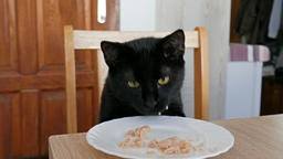 Hungry cat is stealing a chunk of tuna fish from a plate on a table. Funny Live Action