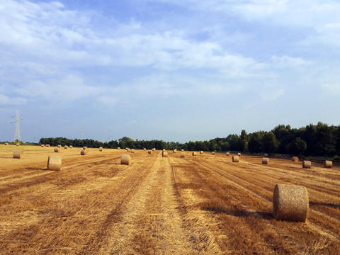 Hay rolls on wheat field on the blue sky background Photo