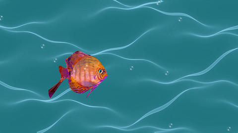 Goldfish animation, cute fish flowing in wavy water with air bubbles, seamless Animation