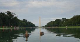 Daytime Washington Monument and Reflecting Pool Establishing Shot Footage