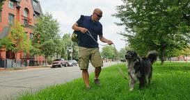 Man Walks Dog in Washington DC Neighborhood Footage