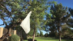 Plastic Bag Hangs from Tree Footage