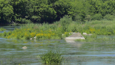Green river with rocks in the countryside Footage