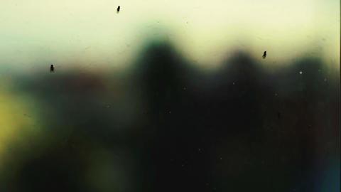 Flies on the glass Footage
