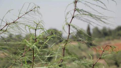 Wind shrubs environment grass Live Action