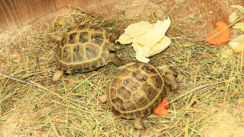Small turtles in zoo Footage