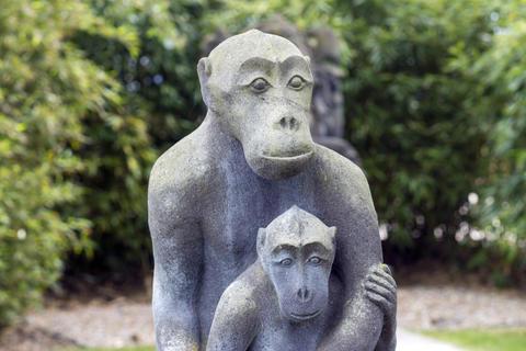 Monkey Stone Stony Photo