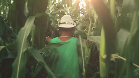 A young farmer wades through a cornfield HD Footage