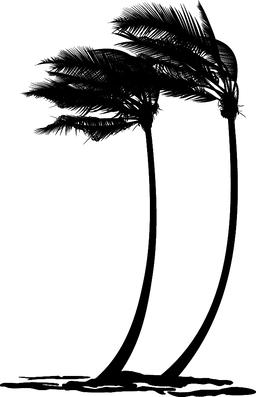 Palm trees in the wind Vector